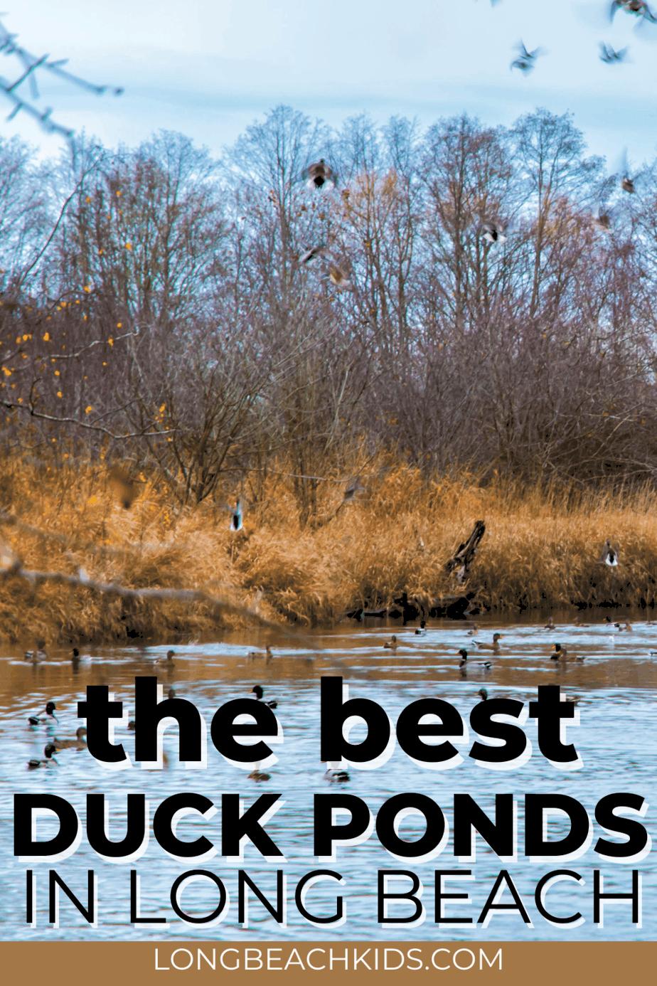 duck pond; text: best duck ponds in long beach